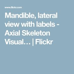 Mandible, lateral view with labels - Axial Skeleton Visual…   Flickr