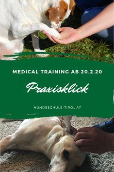 Körperpflege und kleinere Untersuchungen können ganz entspannt sein! Investigations, Dog Training, Pooch Workout