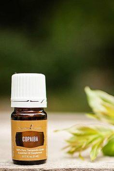 Extraído de puestos de copaiba, un gran árbol que se encuentra en su mayoría en la selva amazónica, el aceite de copaiba tiene una serie de propiedades medicinales. Este aceite natural, esta indica…