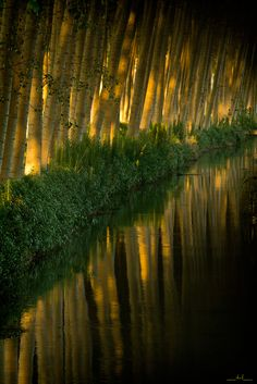 """'Candles' ~ Photo by Davide on Flickr. """"There is a long ditch that crosses the road not far from my home. I noticed it by chance.  At the beginning you can observe only a row of poplars. Nothing of particular, they are everywhere here. But when you arrive near the water, a deep perspective unexpectedly opens in front of you: it seems to get in a spiritual place..."""""""