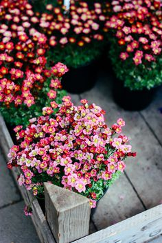Floral tour through #Hamburg from @Madame Love #flowers, #shops, #sistermag #sistermag9
