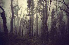 Forrest - William James Vincent Broadhurst