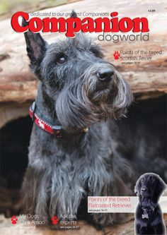 Latest edition out now! #dogs #companion #pets