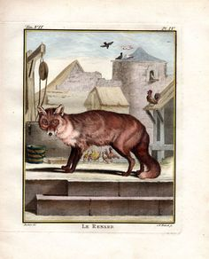 """"""" le Renard """", 1766. Copper engraving, Antique Hand Colored Print, Buffon Natural History. Measures 10 x 8 inches. 27 x 22 cm."""