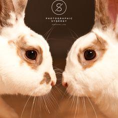 double trouble.  #StAlbans #Hertfordshire #Portraits #FamilyPhotography #London #StudioPhotography #photograph #photographer #likesforlikes #photographylovers #enrichinglives #bunny #bunnies #rabbit #rabbits #bunnylove #rabbitsofinstagram #bunniesofinstagram #bunniesofig #rabbitstagram #pet #pets #bunniesworldwide #houserabbit #bunnyrabbit #bunnygram #bunnystagram #bunnyoftheday #bunnylife #rabbitlover #bunnyears #babybunny #cutebunny #minilop #animal #fabbunnies