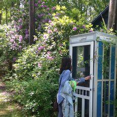"pohaberry:  ""a little garden adventure!   """