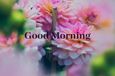 A collection of Beautiful Good Morning Images, beautiful good morning pictures, whatsapp good morning images and quotes. Sweet Good Morning Images, Morning Images In Hindi, Good Morning Gif, Good Morning Picture, Morning Pictures, Hd Love, Hd Quotes, Friends Image, Wallpaper Quotes