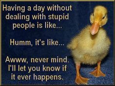 Dumb Quote Funny Sayings | Stupid people quotes, Funny quotes