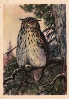 "A. Trofimov ""Owl"" 1954, Russian"
