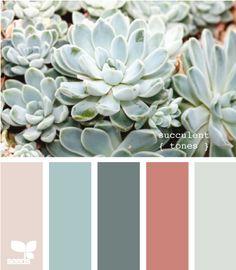 Seeds Design   Color Palette  