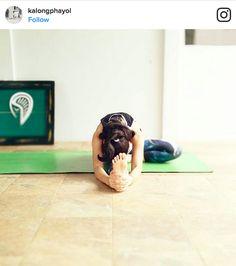 Tiefe Verbindung durch Partner Yoga | Yoga, Partner yoga and Fitness
