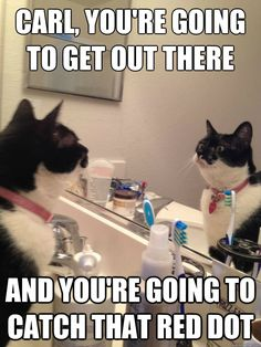 Carl, you're going to get out there and you're going to catch that red dot. - Self Help Cat