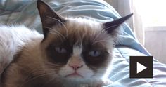 Grumpy cat is sleepy! She sure looks weird!   #cvotw