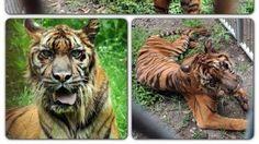 Petition · EN VENEZUELA ZOOLÓGICOS DE LA MUERTE, !Los ANIMALES mueren de HAMBRE! . · Change.org