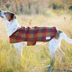 Billy Wolf Dog Coat | Arlo Water-Resistant Coat