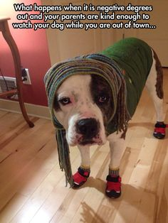 Staying warm // funny pictures - funny photos - funny images - funny pics - funny quotes - #lol #humor #funnypictures