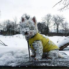 """Snow? What snow?"""