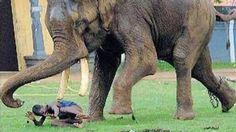 Animal Attack Kills Human Compilation Videos