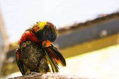 Lorikeet that just rolled out of bed... [OC][4766x3177]