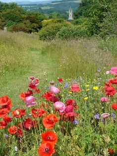 The Wild Flower Meadow with Poppies in The Cottage Garden in the foreground