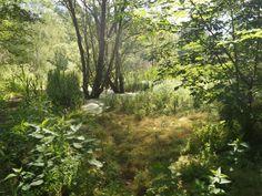 So schön ist die Wildnis vom Naturpark Barnim