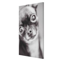 >>>This Deals          Face of a Chihuahua Dog Stretched Canvas Print           Face of a Chihuahua Dog Stretched Canvas Print you will get best price offer lowest prices or diccount couponeHow to          Face of a Chihuahua Dog Stretched Canvas Print please follow the link to see fully re...Cleck Hot Deals >>> http://www.zazzle.com/face_of_a_chihuahua_dog_stretched_canvas_print-192954171207658075?rf=238627982471231924&zbar=1&tc=terrest