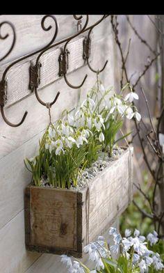Decoration ideas with snowdrops- Deko-Ideen mit Schneeglöckchen Snowdrops in a wooden box - Garden Cottage, Garden Pots, Vegetable Garden, Container Plants, Container Gardening, Ideas Terraza, Deco Floral, Dream Garden, Garden Projects