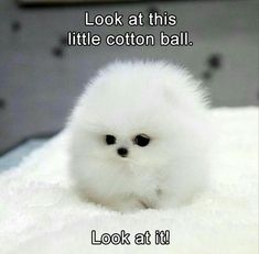 Funny animal pictures of the day 24 pics daily lol pics. funny cute baby animals with captions Cute Animal Memes, Cute Funny Animals, Funny Cute, Funny Dogs, Cute Cats, Funny Humor, Dog Humor, Pics Of Cute Animals, Small Animals Pets