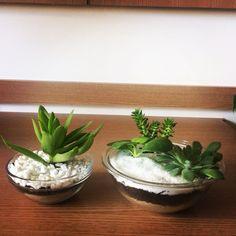 Dois orgulhosos integrantes da família Gilberto os vasinhos de vidro são finos e elegantes  #oitominhocas #maisverde #plantinhasemcasa #decoracao #suculentas #succulentlove #elo7 #elo7br