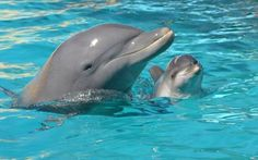 Bebé delfín en Mundo Marino, Argentina