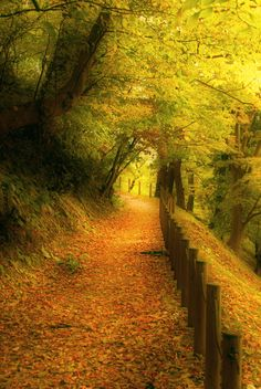 Autumn colors. Beautiful !!