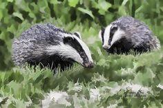 Badgers at Play #animalprint by Iain S Byrne