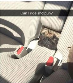 Top 23 Funny Animal Memes Of The Day