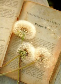 Image result for dandelion on book photography
