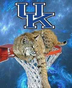 Love University of Kentucky!