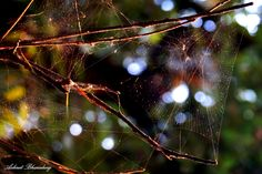 """The Web"" Camera: SONY SLT-A58  Focal Length: 55 mm  Shutter Speed: 1/20 sec  Aperture: f/6.3  ISO: 200 #photography #light #macro"