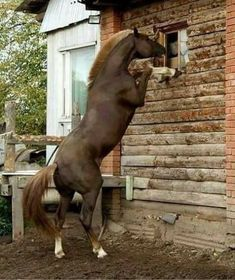 This horse is smart! Peeking through the window to see where you are, lol!