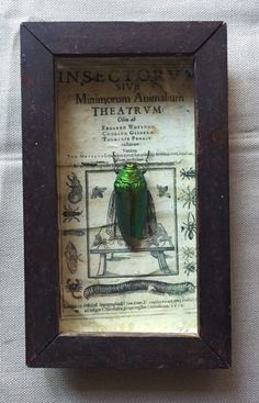 SOLD - beetle  in box frame