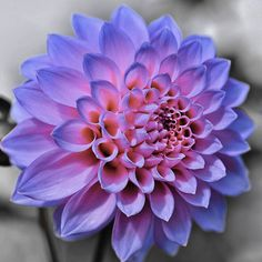 mornflowers