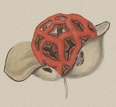Das System der Pilze und Schwämme, 1817 (detail)