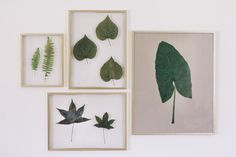 How to Frame Real Leaves to Create Original Botanical Art Leaf Wall Art, Leaf Art, Framed Wall Art, Framed Leaves, Pressed Leaves, Leaf Projects, Diy Projects, Macrame Wall Hanging Diy, Leaf Crafts