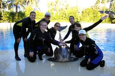 Training dolphins at the Mirage Resort in Las Vegas, NV