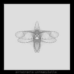 eriocrania unimaculella .insecta collection #generativeart made with #processing.