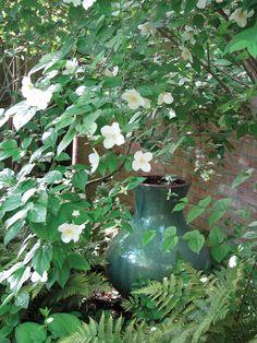 Mock Orange | Louisiana Gardener Hot Plants