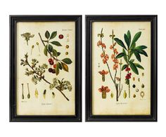 "Komplet 2 grafik ""Botanical"", 40 x 60 cm"