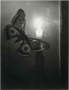 """Brassaï: """"A past hidden in darkness. Her present cloaked in serects. The future holds the only truth that cannot be escaped."""""""