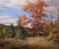 Resultado de imagem para uma paisagem de caça