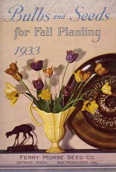 seed catalogue illustrations - Google Search