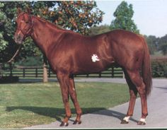 """Naevus (1980 c. by Mr. Prospector out of Mudville, by Bold Lad), was a Grade 1-placed winner and the sire of nearly 30 stakes winners. The cleverly named horse (""""Naevus"""" being a Latin word which means birthmark) with the large white spot on his side, won his first start at Del Mar at two, reappeared in January of his three year old season with a win at Santa Anita, then ran second or third in four straight graded stakes, including the 1983 Santa Anita Derby (Gr 1) for trainer John Fulton."""