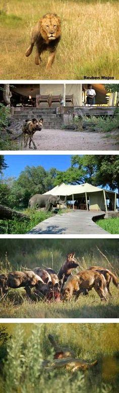 Zarafa Camp March 2013 Zarafa Camp   March 2013